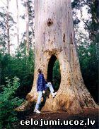 Beedelup nacionālais parks