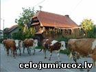 horvātija, Cigoča
